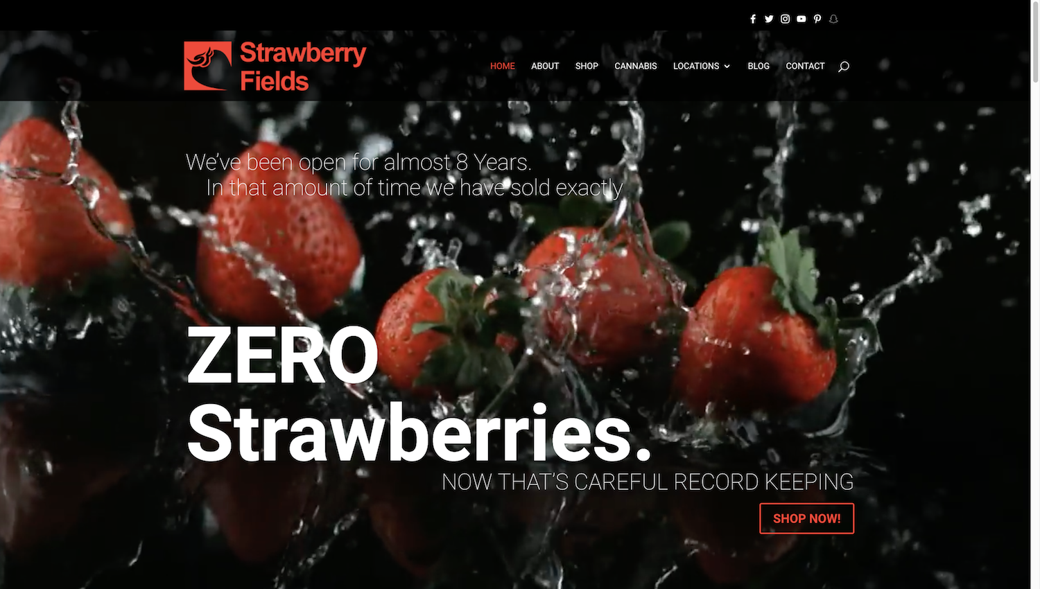 strawberry-fields-portfolio-1